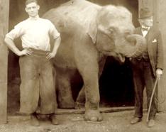Denny Chester, circus farrier