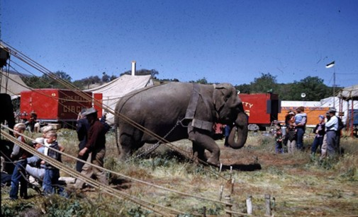 elephant pulling up circus tent copy