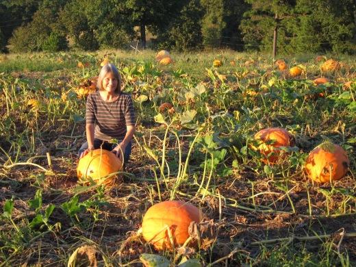 Danyce pumpkin patch